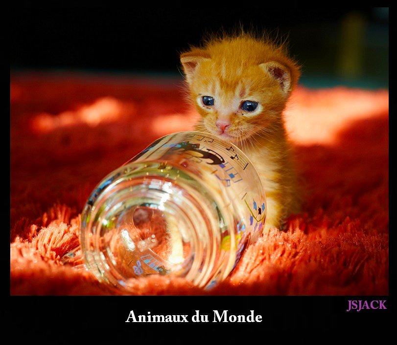 Animaux du Monde, /  dans Animaux du Monde animaux-w1