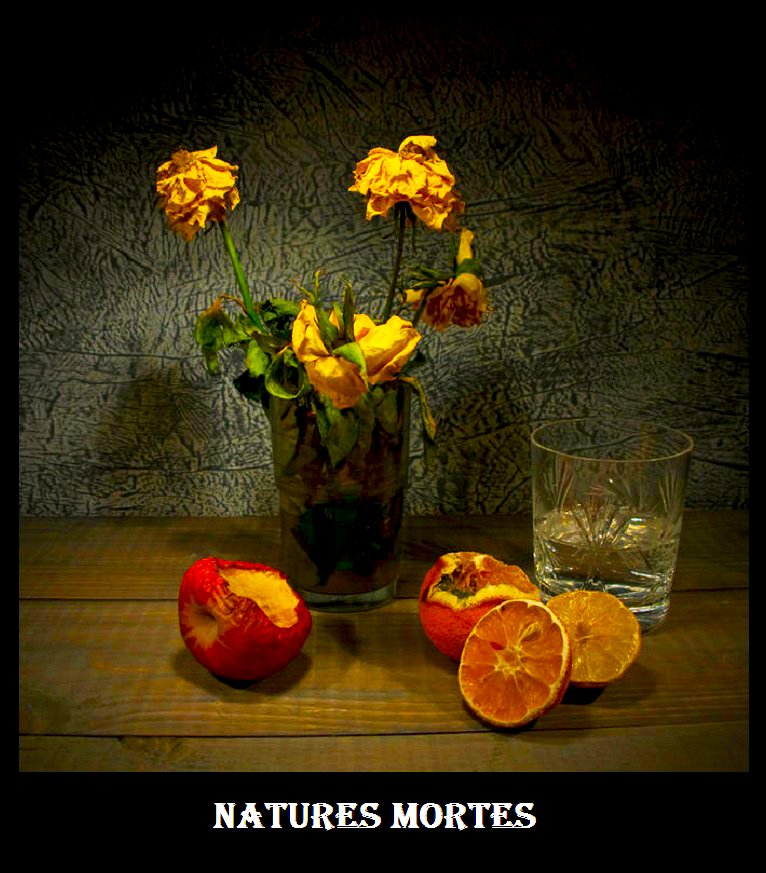 Natures Mortes,  /  dans Natures mortes natures-mortes-1