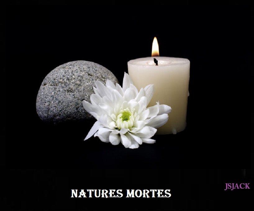 Natures mortes,  /   dans Natures mortes natures-mortes-2
