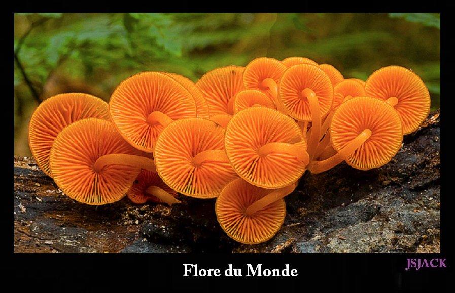 Flore du Monde, /   Blog.Js.Jack.Photography dans Flore du Monde flore-1