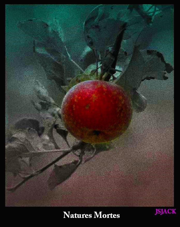 Natures Mortes, /  dans Natures mortes nature-morte-13