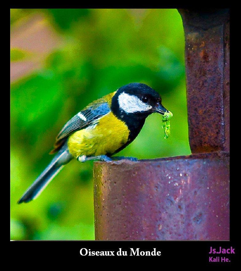 Oiseaux du Monde, /   Blog.Js.Jack.Photography dans Oiseaux du Monde oiseaux-f12