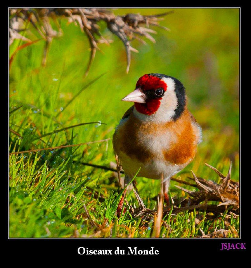 Oiseaux du Monde, /  dans Oiseaux du Monde oiseaux-x11