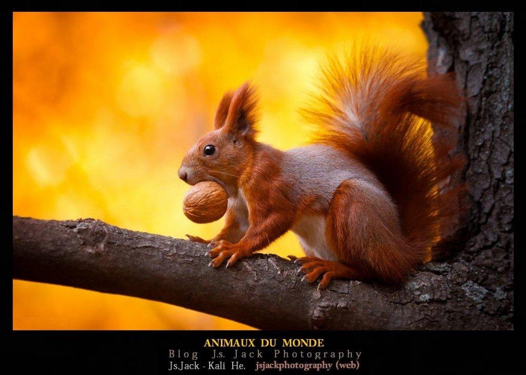 Animaux du Monde, /   Blog.Js.Jack.Photography dans Animaux du Monde animaux-du-monde-d11
