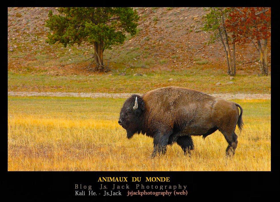 Animaux du Monde, /  Blog.Js.Jack.Photography dans Animaux du Monde animaux-monde-01