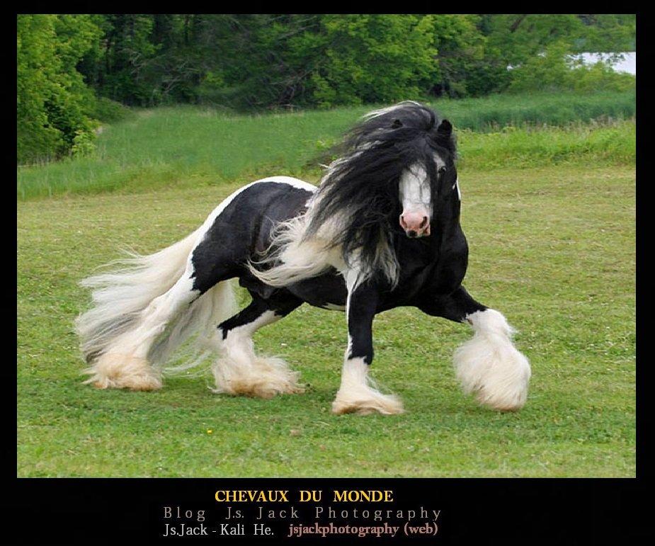 Chevaux du Monde, /   Blog.Js.Jack.Photography dans Châteaux du Monde chevaux-monde-c1