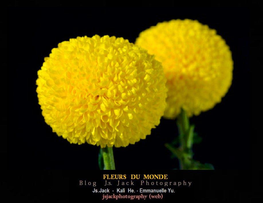 Fleurs 111
