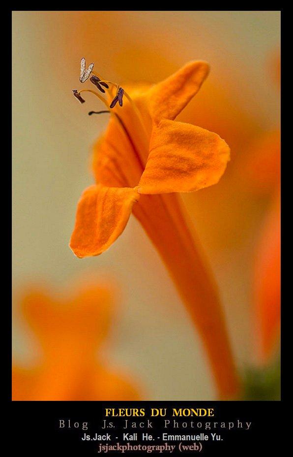 Fleurs Monde 01