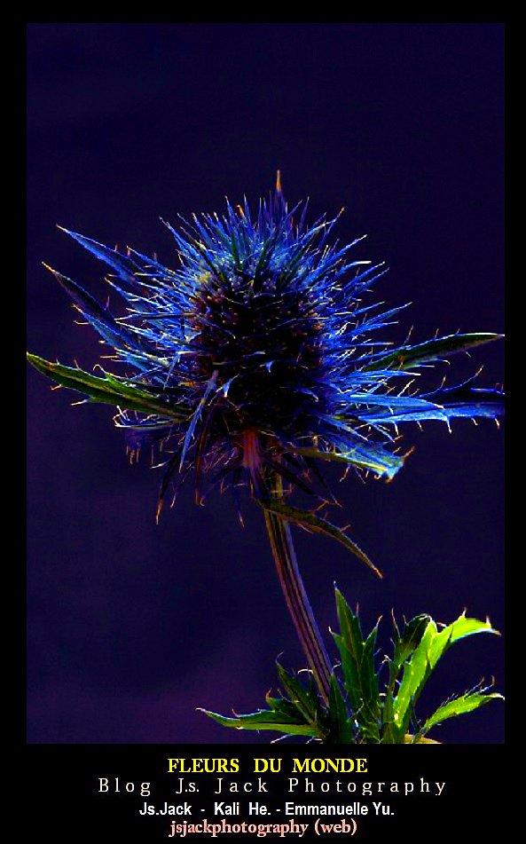 Fleurs monde V1