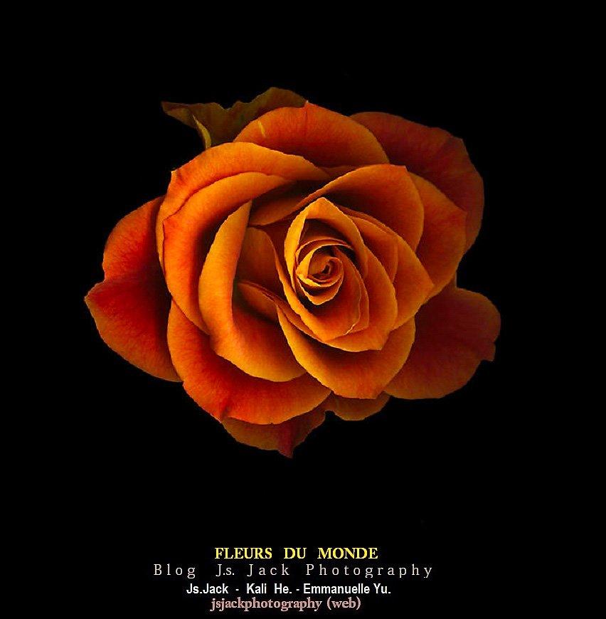 Fleurs Monde Z1