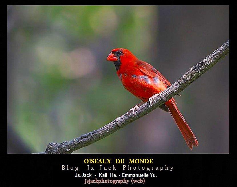 Oiseaux monde BB