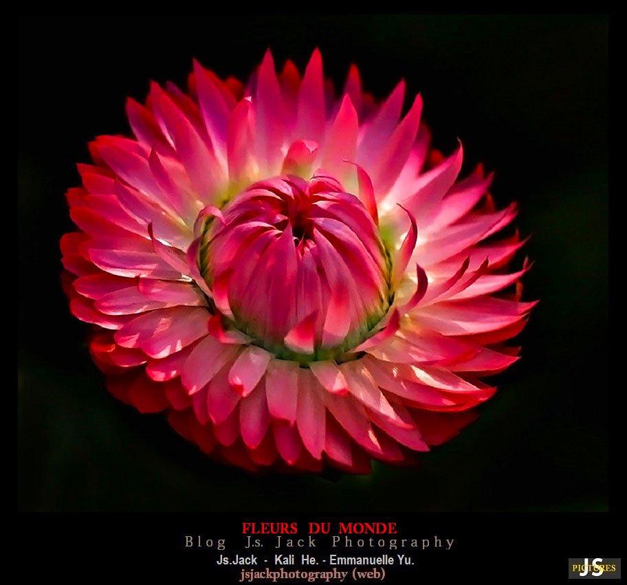Fleurs du monde 0111