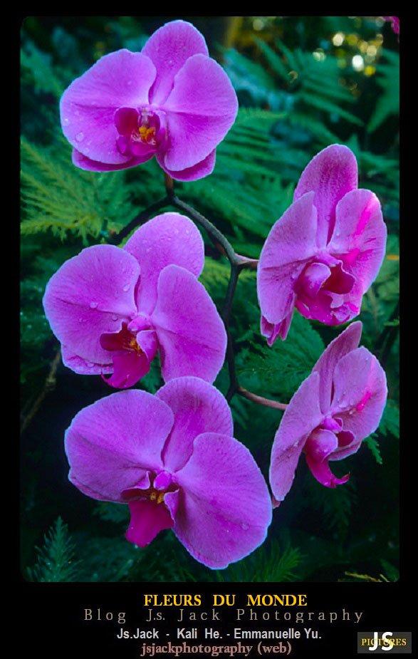 Fleurs monde S2