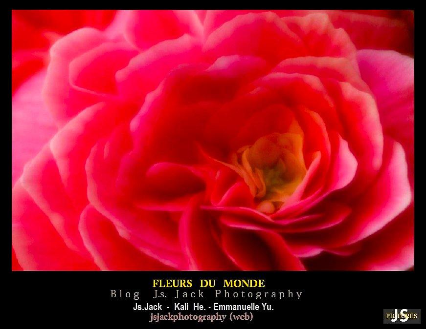 Fleurs du Monde CC1