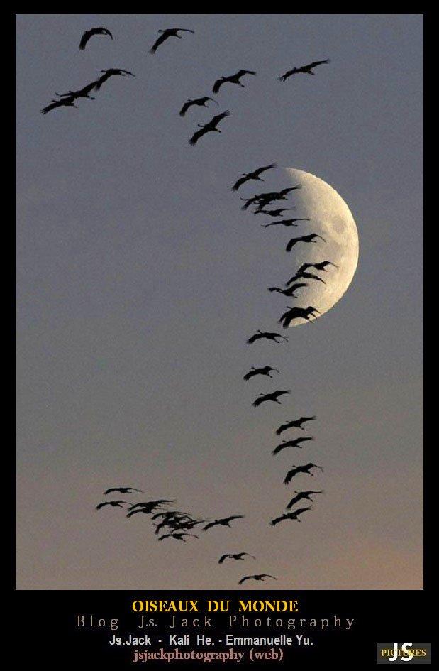 Oiseaux du Monde R3