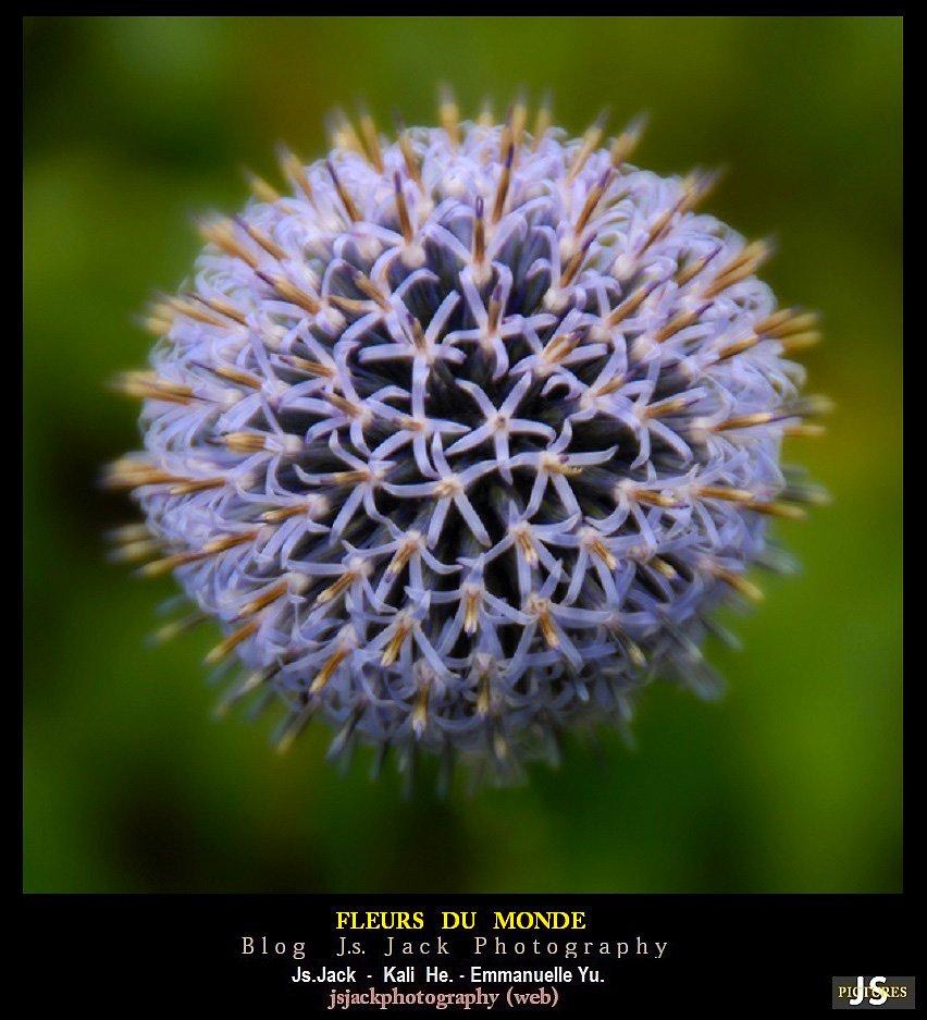 Fleurs du Monde 99