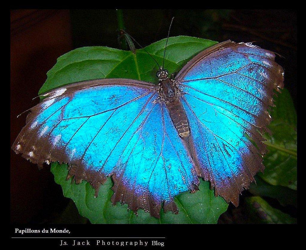 Papillons du Monde 001