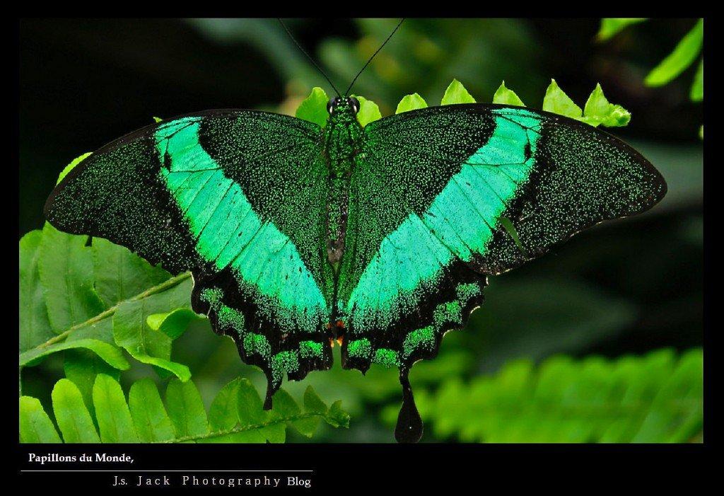 Papillons du Monde 002