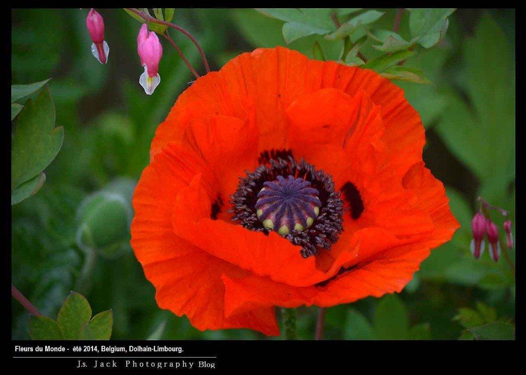 Fleurs du Monde 700