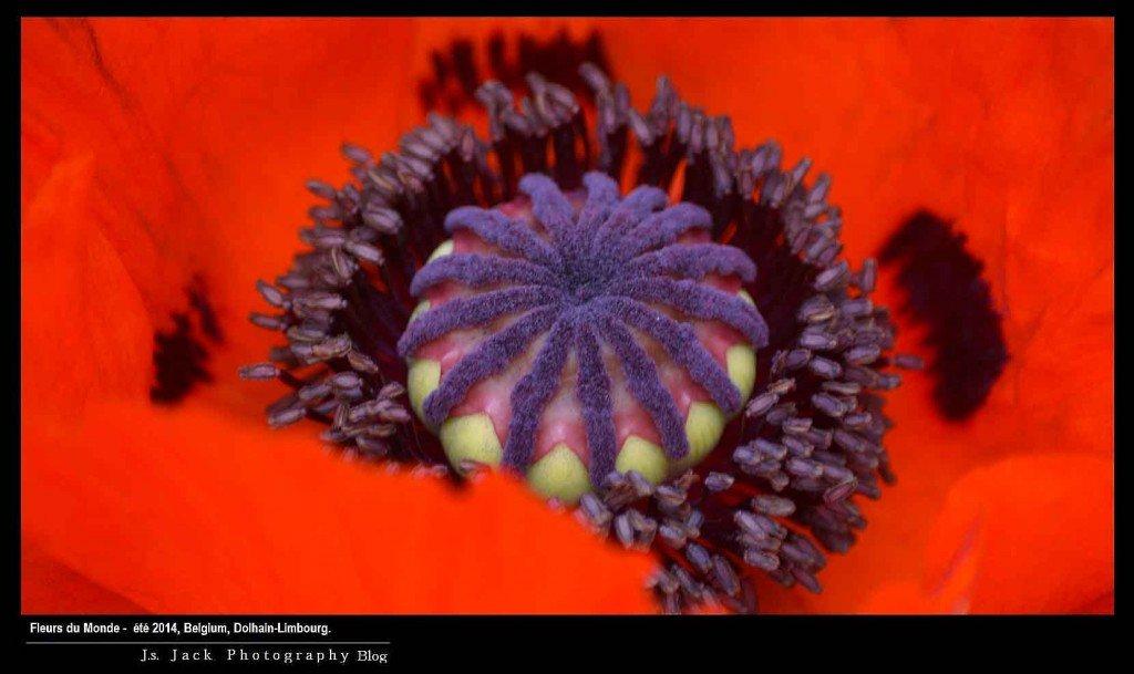 Fleurs du Monde 778