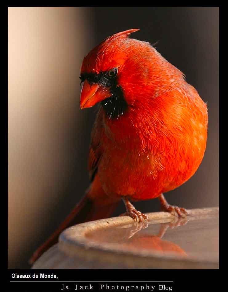 Oiseaux du Monde 100