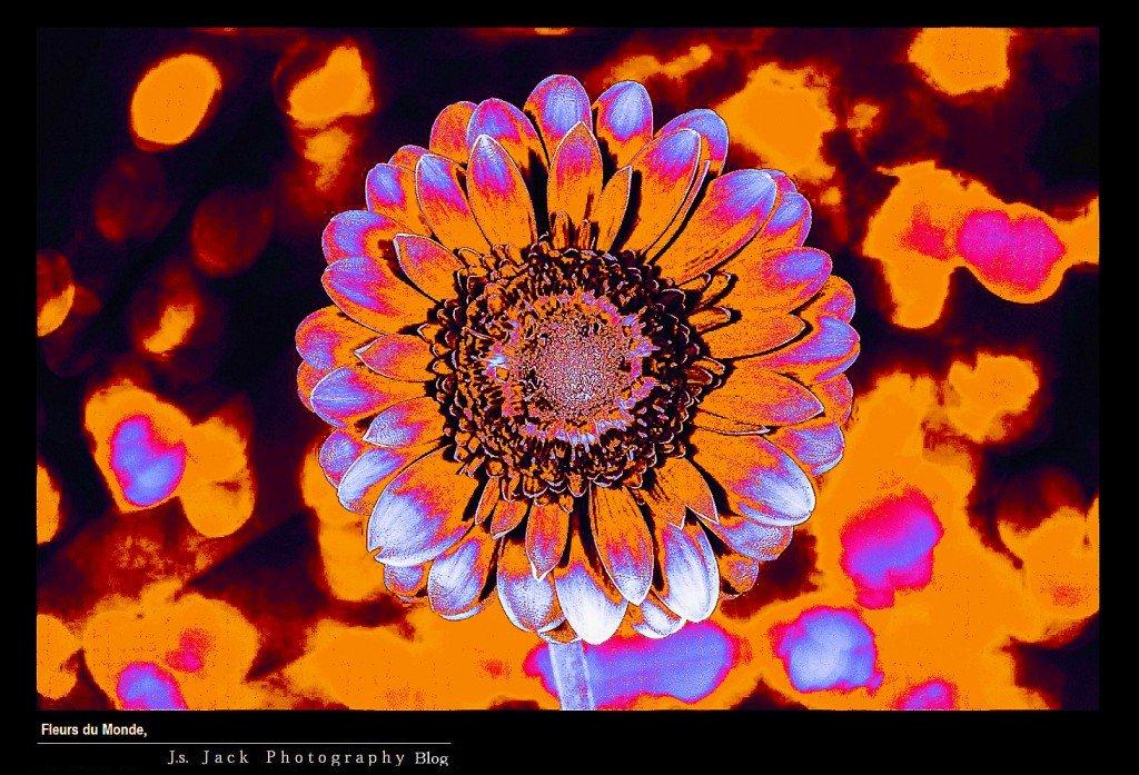 Fleurs du Monde V11