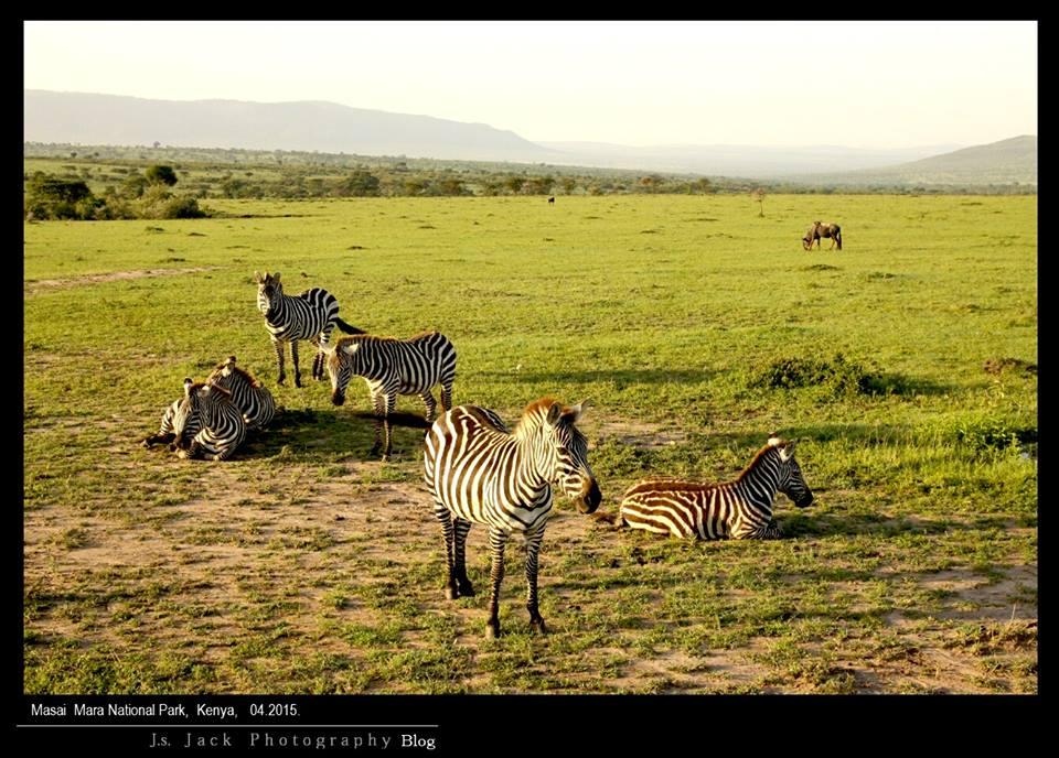 Masai réserve 004