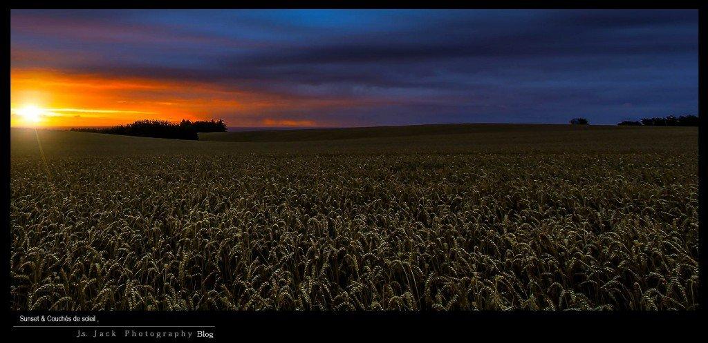 Sunset 88